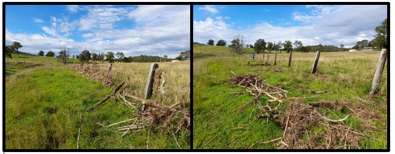 before and after of clearing flood debris off fences